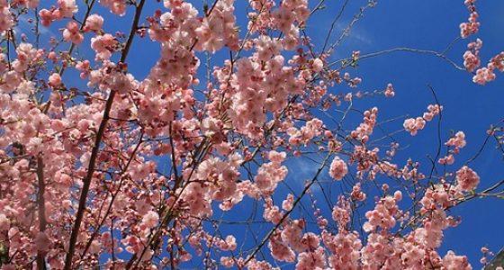 Senderismo Almendros en flor Cristal de Roca